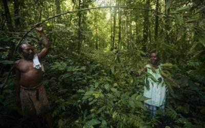 Forest Deforestation and Degradation in Papua New Guinea – Issue, Assessment and Solutions
